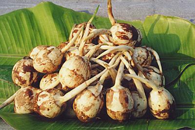 2.矮油,这是什么蔬菜?大声吼出答案并列举3个用到它的菜品!
