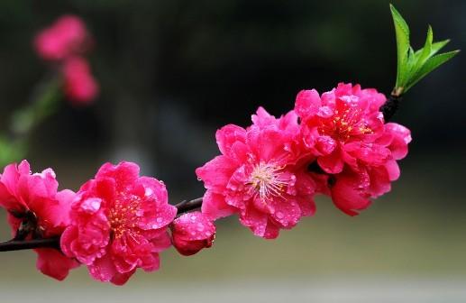 地点:虎丘山风景名胜区   一年一度的虎丘花会,是苏城春季继太湖梅花