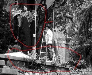 网友拍摄的图片,并在图上作出了标注(请图片作者来快报领取稿费)   剧组撤离后,拍摄现场遗留下来的树枝 现代快报记者 施向辉 摄