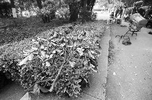 剧组撤离后,拍摄现场遗留下来的树枝 现代快报记者 施向辉 摄