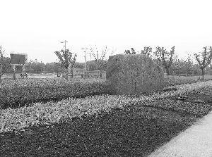 在入口石碑处种植了鲜花带