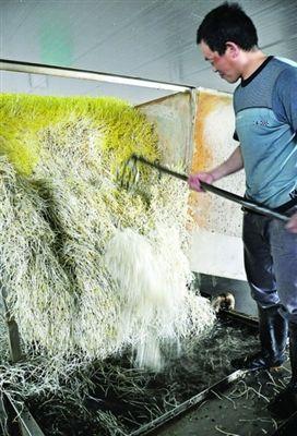 工作人员将豆芽倒入净水池进行清洗