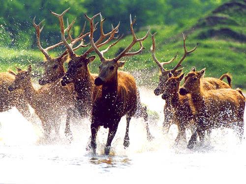 大丰麋鹿自然保护区