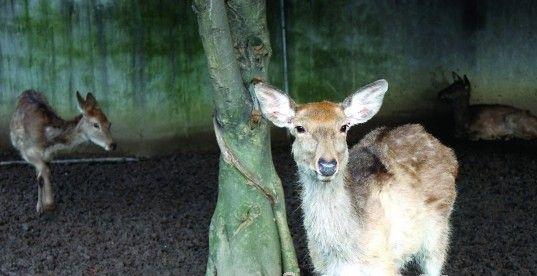 给小鹿取名字