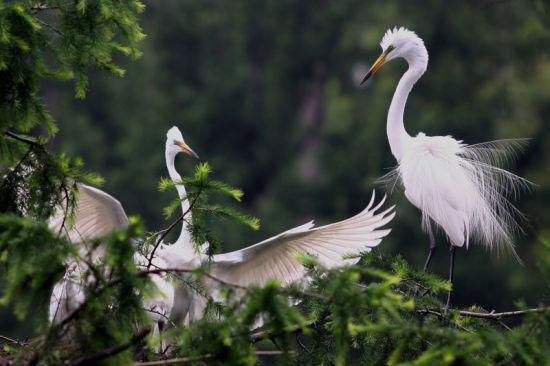 最值得一提的是白鹭岛温泉公园
