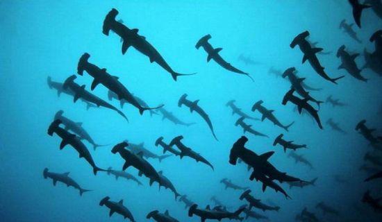 洪都拉斯蓝洞,有神出鬼没的鲨鱼环伺在侧