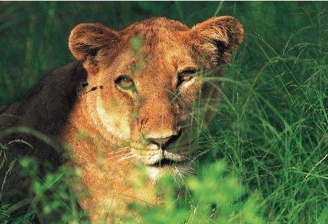 :坦桑尼亚的塔伦吉尔国家公园