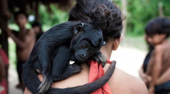 妇女用乳汁哺育猴子