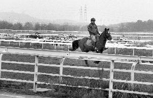 南京赛马场还能见到有人在骑马 马晶晶 摄