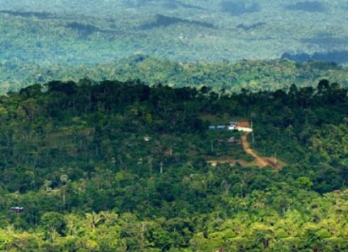 亚马逊的热带雨林   亚马逊河位于南美洲