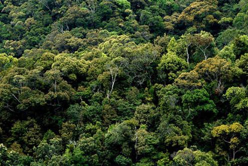 我国现存面积最大,保存最完好的热带原始雨林——尖峰岭,位于海南岛