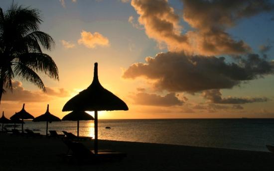 夕阳森林海边情铝图片展示