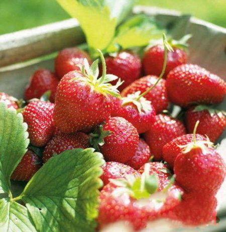 轻松出发京郊草莓采摘多组合休闲体验