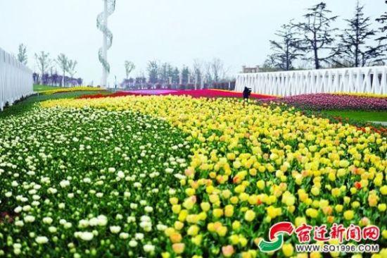 动漫植物丛 花卉