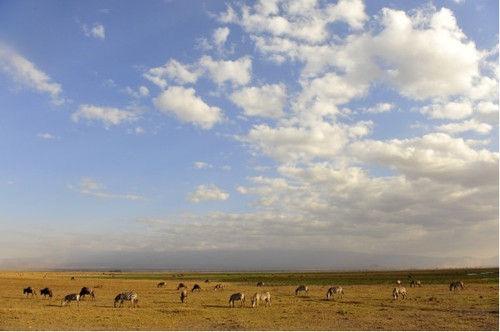 伟大的电影走出非洲拍摄地点就是在具有浓厚非洲色彩