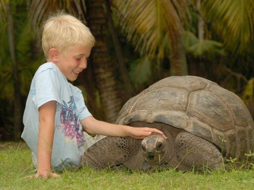 塞舌尔的巨龟