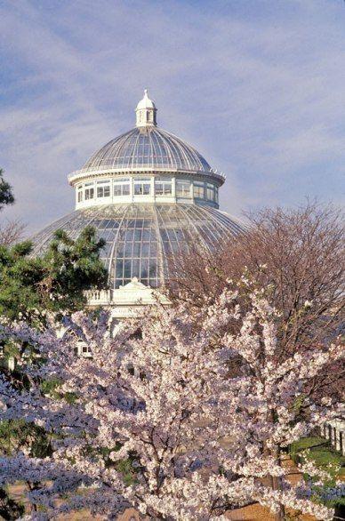 纽约植物园