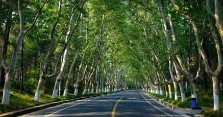 南京10条绿道开建