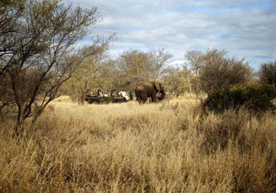 到非洲游猎