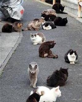 日本的猫岛