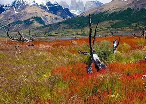 百内国家公园(智利)