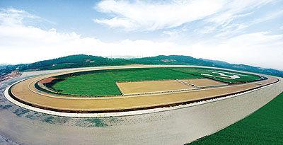 南京马术赛马场空拍图