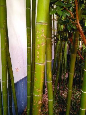 周围只有约20厘米高的木栅栏围着,游客抬脚就能走进去,里面的竹子上