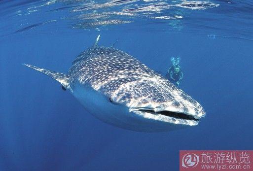 无脊椎浮游动物