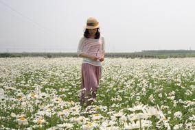 后白鲜花季・5月雏菊海