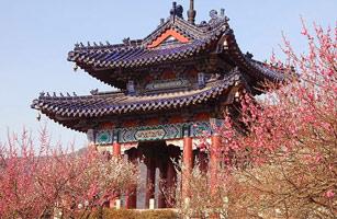 国际梅花节-梅花山赏梅